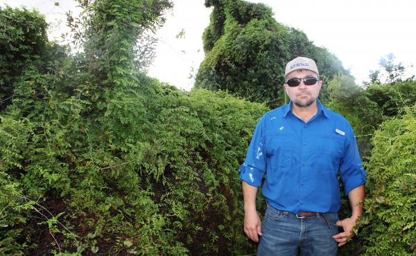 Old World climbing fern on a tree island in the Everglades surrounds LeRoy Rodgers of the South Florida Water Management District. Environmentalists say it's one of the worst invasive species the state has faced in a long time.