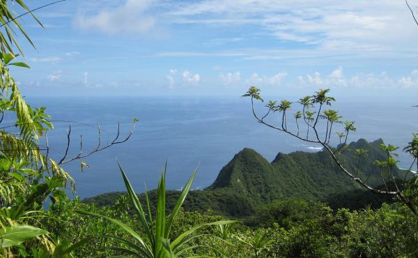 A view of the lush Samoan vegetation in American Samoa, Tutuila Island.