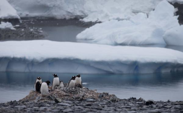 Penguins gather near a Chilean research station on the Antarctic Peninsula, not far from the Argentine station that reported the record high temperature Thursday. World meteorological experts still need to verify the record, but it does fit with a broader
