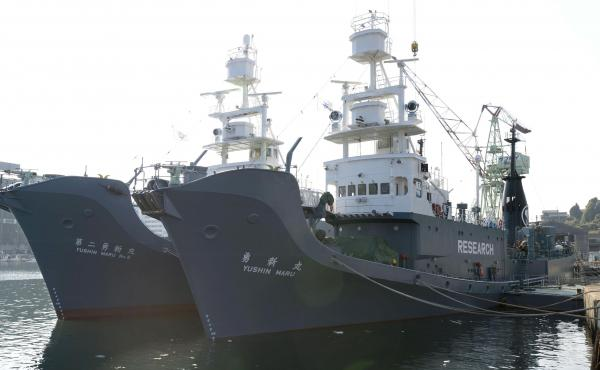 "Japan once labeled its whaling vessels with prominent ""Research"" tags. The country will resume commercial whaling hunts in 2019. Here, the whaling ships Yushin Maru (right) and Yushin Maru No. 2 are seen before leaving for the Antarctic Ocean for a whale"