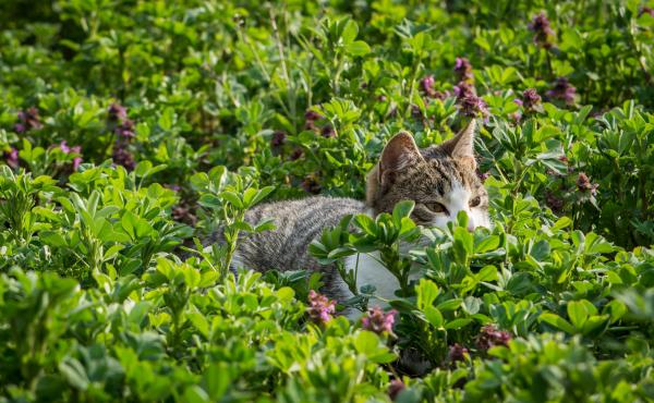 Scotland Yard wrapped up a near three-year-long investigation into cats mutilation in the U.K., saying wildlife was the likely culprit.