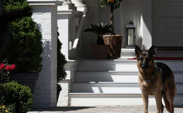 President-elect Joe Biden's dog Champ stands during speeches at the vice president's residence in 2012. When the family returns to Washington, Champ will have to show his younger brother, Major, the ropes.