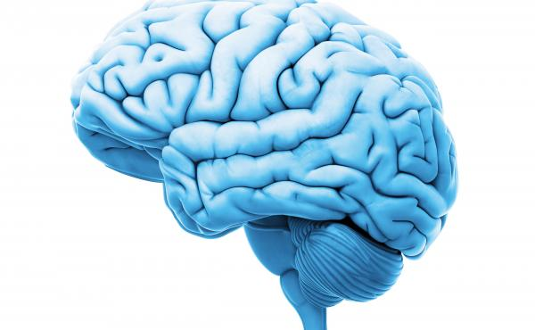 The scientists tested tissue samples from the brains of deceased patients who suffered from autism, schizophrenia and bipolar disorder.