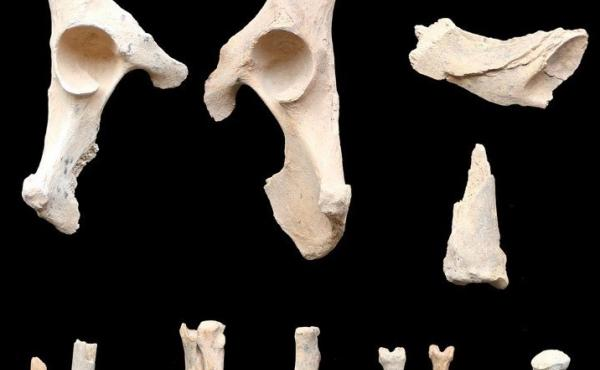 These 6,000-year-old remains found buried alongside humans are believed to be the earliest example of dog domestication on the Arabian Peninsula.
