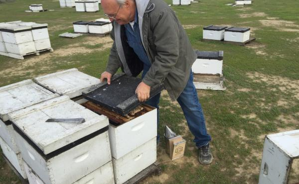 Bret Adee, a third-generation beekeeper who owns one of the largest beekeeping companies in the U.S., lost half of his hives — about 50,000 — over the winter. He pops the lid on one of the hives to show off the colony inside.