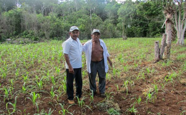 Farmers Gualberto Casanova (left) and Dionisio Yam Moo stand among young corn plants in Yam Moo's improved milpa plot.