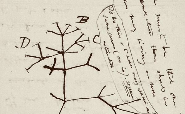 """Included in the missing notebooks is Charles Darwin's famous """"tree of life"""" sketch, according to Cambridge University Library."""