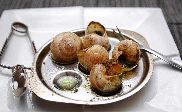 Cooked Burgundy snails in garlic butter. These snails are a popular French delicacy. These days they are imported into France from other European countries.
