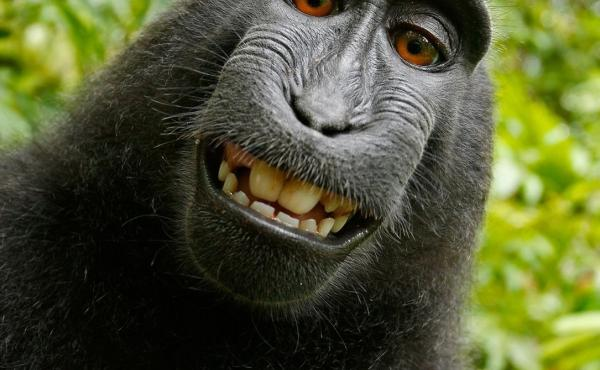 A macaque took this self-portrait in 2011 with a camera owned by photographer David Slater. PETA says the monkey owns the copyright; Slater says he does. The U.S. Copyright Office says no one can, and a federal judge has now said it would be up to Congres
