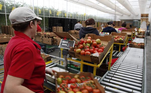 The family-owned Wholesum Harvest had to meet a checklist of more than 300 standards — including many worker protections — to become the first American farm certified by Fair Trade USA. Workers at its Nogales, Ariz., tomato farm recently received a ch