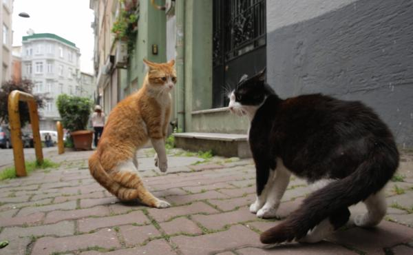 The documentary Kedi gives a cat's-eye view of the back alleys, boho enclaves and rat-infested piers of Istanbul.