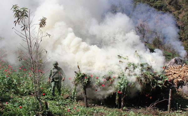 A Mexican soldier piles poppies for incineration near the town of Tlacotepec, in Guerrero state, Mexico. The army says it slashes and burns poppy when fields are too difficult to access by helicopter or when they want to protect fruits and vegetables grow