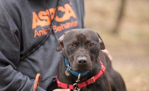 A new leash on life: The ASPCA's Behavioral Rehabilitation Center in Weaverville, N.C., helps traumatized dogs learn to trust humans again.