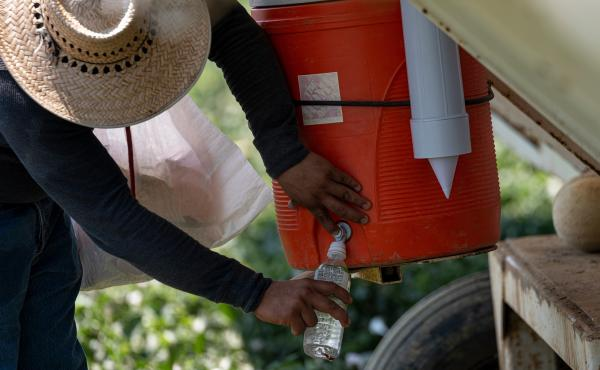 A worker fills a bottle with water on a farm during a drought in Firebaugh, Calif., on July 13.
