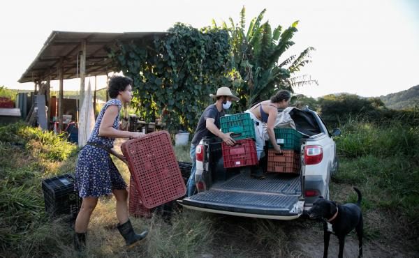 Liege Camila Pistore Veras, Rafael Duckur, and Joana Luiza Mendes (left to right) load boxes of produce into a truck at a farm outside of Sao Paulo, Brazil. This produce, and more, will be distributed in favelas, poor urban neighborhoods where residents l