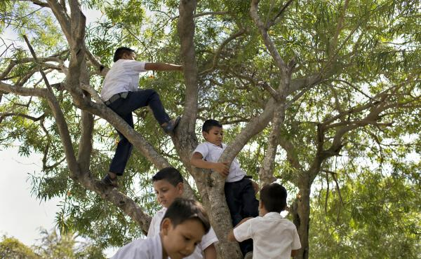 Children climb a tree on the grounds of a school in La Rivera Hernandez, a neighborhood in San Pedro Sula, Honduras, that is notorious for high levels of violence in a city that has some of the highest homicide rates in the world.