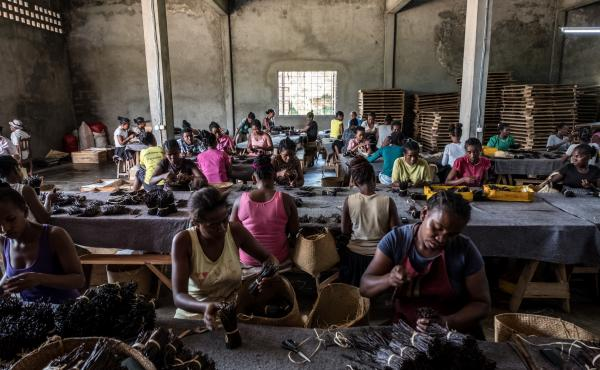 Workers sort through bundles of vanilla at the Virginia Dare warehouse in Antsirabe Nord, Madagascar. When this photo was taken last year, the warehouse contained roughly $5 million worth of vanilla.