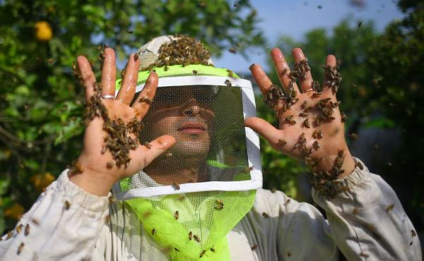 PALESTINIAN-GAZA-BEEKEEPING-HONEY