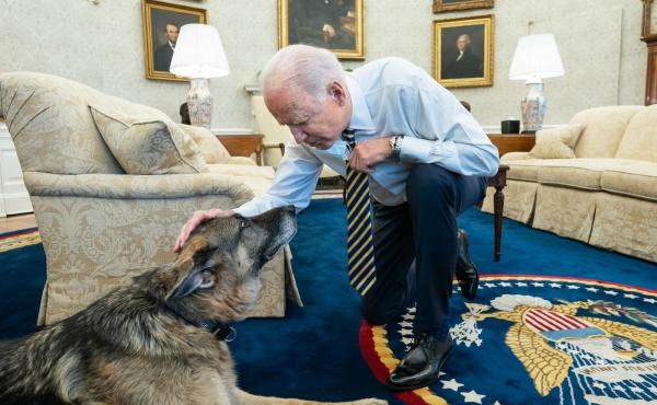 President Biden pets Biden family dog Champ in the Oval Office in February. On Saturday, Joe and Jill Biden announced that Champ had died.