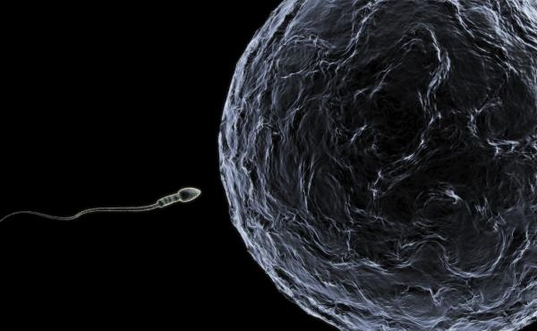 New research could be promising for infertile men. Scientists were able to make immature sperm cells from skin cells. Their next challenge is to make that sperm viable.