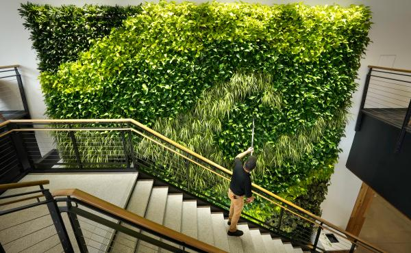 Architects say making the office more like the outdoors — with filtered air and good ventilation — will be a priority post-pandemic. This living wall in the Danielle N. Ripich Commons at the University of New England in Biddeford, Maine, is one such a