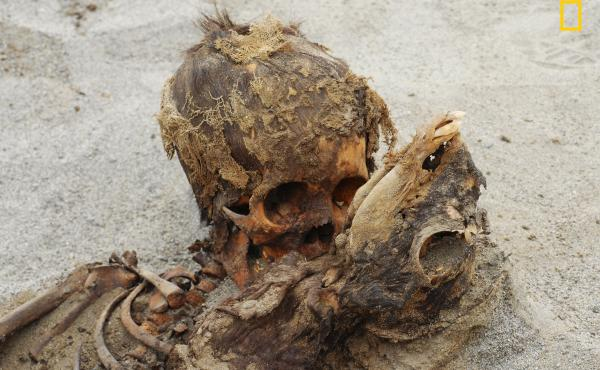 Buried together, a child and a llama were part of a mass sacrificial killing that included more than 140 children and over 200 llamas in the Huanchaquito-Las Llamas site in coastal Peru near Trujillo.