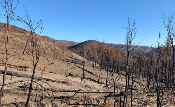 The Camp Fire burned so hot and intense there is little remaining in the mountains near Concow, Calif. Residents would like to camp out on their properties, but the federal government says they have to wait until toxic debris is cleared.