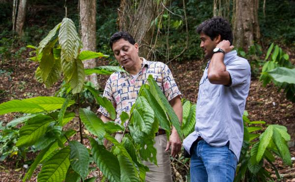 Eduardo Cortes (right) and Jose Martinez Cruzado examining one of the cocoa trees that Cruzado is growing for Cortes's company.