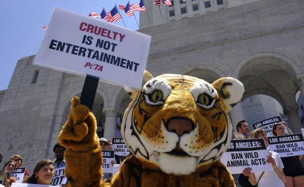 Protesters with People for the Ethical Treatment of Animals (PETA), including a costumed tiger, gathered at City Hall in Los Angeles last year to call on the city to prohibit circuses from using tigers, lions, and other wild animals in their acts. Circuse