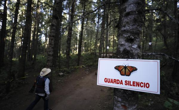 A guide walks past a sign asking for silence near the winter home of monarch butterflies in El Rosario reserve near Ocampo, Michoacán, in Mexico on Friday.