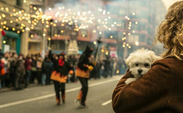 Celebrations that include loud fireworks often terrify dogs. Though there's not yet much science to confirm it, some veterinarians and pet owners say CBD, an extract of hemp or marijuana, can ease a pet's fear.