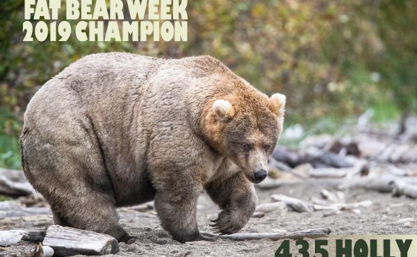 """""""Holly"""" is the winner of this year's Fat Bear Week."""