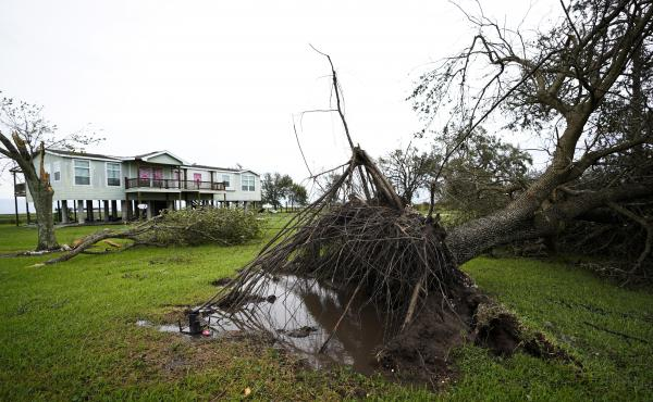 A tree is uprooted in the aftermath of Hurricane Laura Thursday in Sabine Pass, Texas.