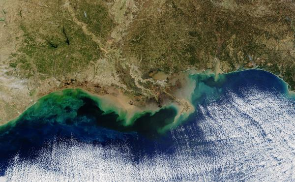 """The teal blue area along the Louisiana coastline represents a """"dead zone"""" of oxygen-depleted water. Resulting from nitrogen and phosphorus pollution in the Mississippi River, it can potentially hurt fisheries."""
