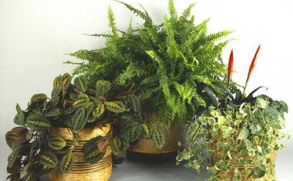 What could you possibly have to learn from a houseplant?