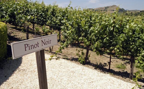 A vineyard in Napa Valley, Calif.