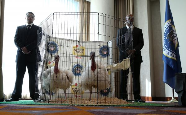 Men dressed as Secret Service agents stand guard next to Tom One and Tom Two, this year's turkey and alternate.