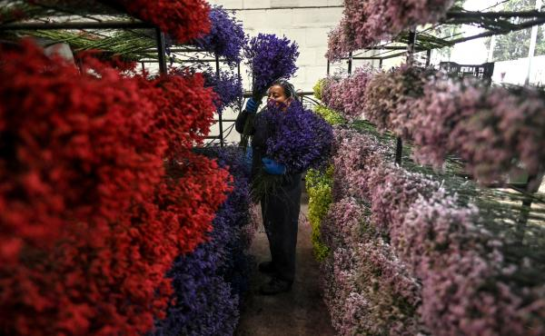 An employee places bouquets on shelves in Bogotá on Feb. 1, as Colombia prepares to export flowers for Valentine's Day amid the new coronavirus pandemic.