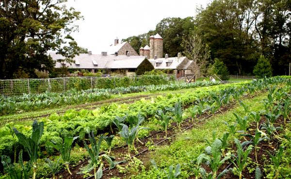 A view of Dan Barber's Stone Barns Center field and barns in Pocantico Hills, N.Y.