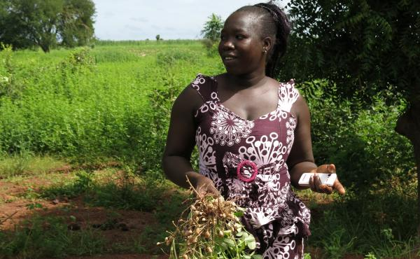Mariama Keita, a farmer in Senegal, uses her cellphone to figure out the best time to harvest her peanut plants.