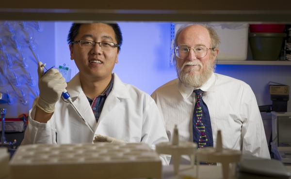 Duke graduate student Tianqi Song and computer science professor John Reif have created an analog DNA circuit that can add, subtract and multiply as the molecules form and break bonds.