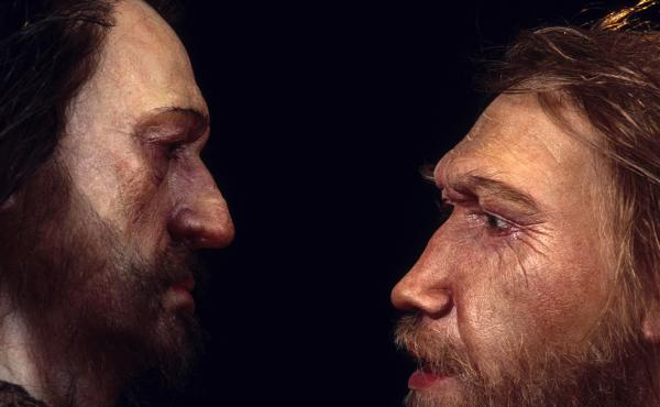 Reconstructions from the Daynès Studio in Paris depict a male Neanderthal (right) face to face with a human, Homo sapiens.