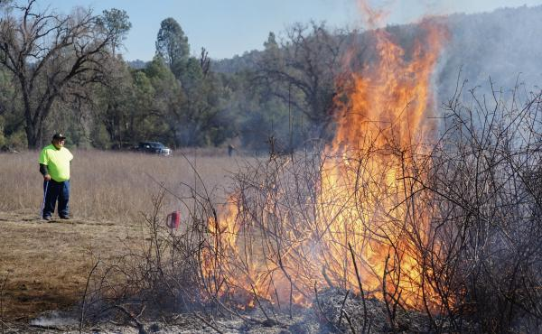 Goode looks on as sourberry bushes burn. After the bushes are burned in the winter, they sprout again in the spring.