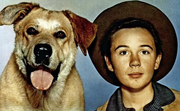 Tommy Kirk, here with his canine co-star in 1957's Old Yeller, has died. Kirk appeared in a string of hit Disney movies such as Swiss Family Robinson and The Absent-Minded Professor.