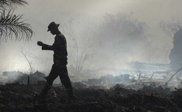 An Indonesian ranger inspects a peat forest fire in Aceh province in July 2017. Indonesia, unlike most of the world, lost less overall tree cover than usual last year.