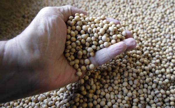 Soybeans ready for shipment and planting at a Kansas farm are one of the products at the center of the trade dispute with China.