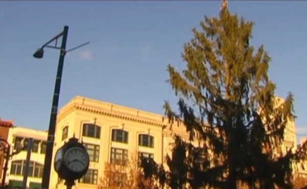 After complaints from residents, this tree in Reading, Pa., is being replaced.