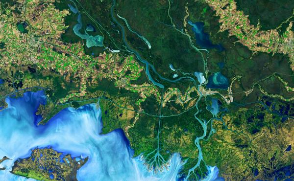 This false-color image, Operational Land Imager (OLI) on Landsat 8, shows the Atchafalaya Delta in Louisiana on Dec. 1, 2016. The colors emphasize the difference between land and water while allowing viewers to observe waterborne sediment, which is typica