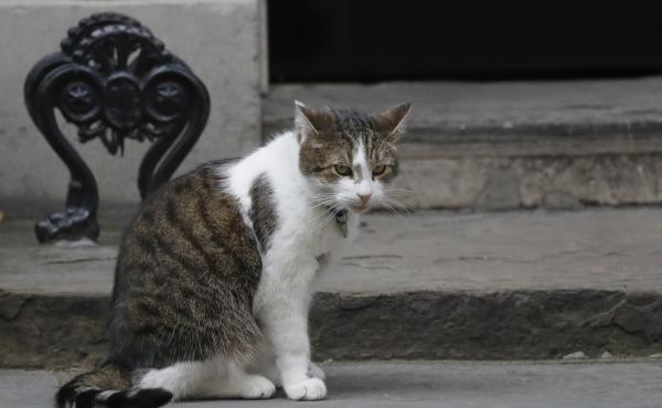 Larry, the 10 Downing Street cat, photographed last year, brought some levity to a Brexit media report on Tuesday.
