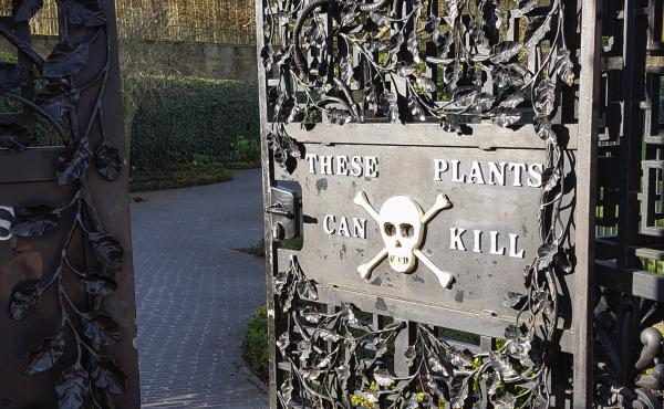 """The elaborate Alnwick Garden in northeast England includes a """"Poison Garden"""" that showcases plants with killer properties. Visitors are invited to look but not touch or even smell."""
